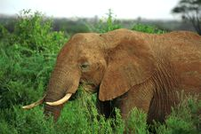 Free Close Up Of African Elephant Stock Photos - 4274083