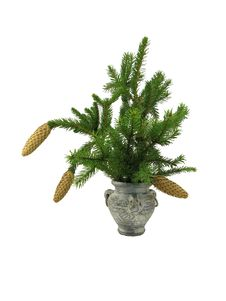 Fir Branch In Old Vase Royalty Free Stock Image