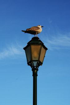 Seagull In Street Lamp Royalty Free Stock Photos