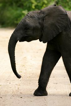 Free African Elephants Stock Image - 4275161