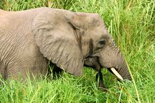 Free African Elephants Royalty Free Stock Photography - 4275167