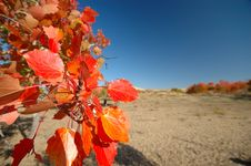 Free Late Autumn Stock Photography - 4275962