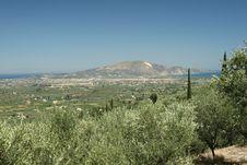 Free Olive Trees -Zakynthos,Greece Stock Images - 4276564