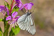 Free Butterfly On Pink Flower Stock Image - 4276571