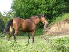 Free Horse Stock Images - 4277514