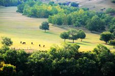 Free Mulan Paddock In Early Autumn Stock Photography - 4278052