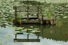 Free Water Lilies Pond Reflection Stock Photography - 4278162