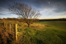 Free A Tree On The South Downs Royalty Free Stock Photography - 4278247
