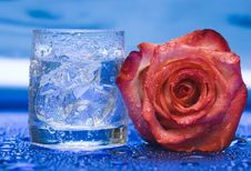 Free Glass With Water And Rose Royalty Free Stock Photo - 4278275