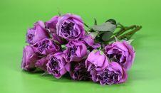 Free Pink Roses Royalty Free Stock Photo - 4278925