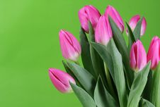Free Tulips Royalty Free Stock Photography - 4278927