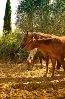 Free Grazing Horses Stock Images - 4279234