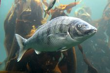 Free Fish Stock Images - 4279424