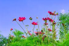 Free Portugal, Algarve, Lagos: Flora At The Beach Stock Photos - 4279683