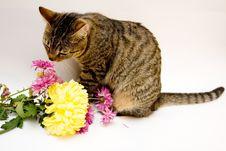 Free Cat Royalty Free Stock Photos - 4280008