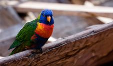 Free Colorful Bird Stock Photos - 4280053
