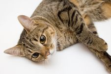 Free Cat Royalty Free Stock Photography - 4280267
