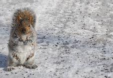 Free Squirrel Stock Photos - 4282643