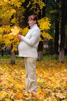 Free Pregnant Woman In Autumn Park Hold Maple Leaf Stock Photography - 4283362