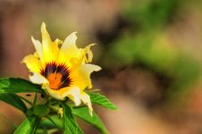 Free Wild Flower Royalty Free Stock Photography - 4284897