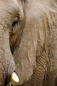Free African Elephants Stock Images - 4284904
