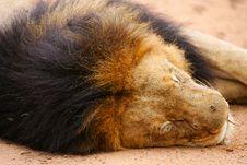 Free African Cape Buffalo Stock Photo - 4285100