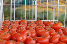 Free Tomatoes Stock Images - 4285144