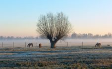 A Tree And Three Horses Royalty Free Stock Image