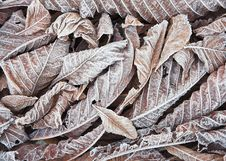 Free Frosty Leaf Background Royalty Free Stock Photo - 4285725