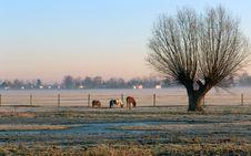 Free A Tree And Three Horses Royalty Free Stock Photo - 4285805
