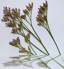 Free Lavender Mirage Stock Images - 4286364