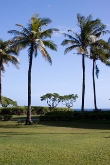 Free Palm Trees In Hawaii Stock Photography - 4288162