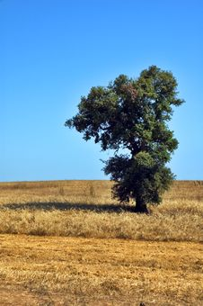 Free Lonely Tree Stock Photos - 4288183