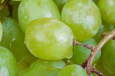 Free Fresh Green Grapes Royalty Free Stock Photography - 4288727