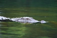Free Crocodile Stock Photo - 4289950