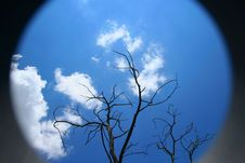 Free Dead Tree Against Blue Sky Royalty Free Stock Images - 4289959