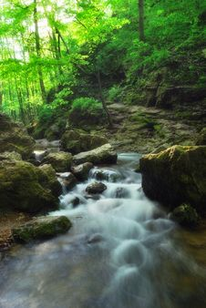Free Forest Stream Stock Images - 42854864