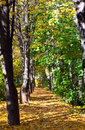 Free Autumn Alley Royalty Free Stock Photography - 4298427