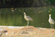 Free Herons Stock Images - 4290614
