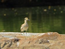 Free Heron Royalty Free Stock Photo - 4290615