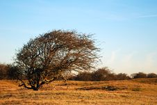 Free Tree In Dunes Spring Time Royalty Free Stock Photography - 4290617
