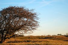 Free Tree In Dunes Spring Time Royalty Free Stock Image - 4290636