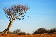 Free Tree In Dunes Spring Time Stock Photos - 4290653