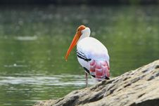 Free Painted Stork Stock Images - 4290694