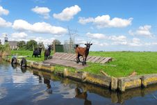 Free Goats Near Canal Royalty Free Stock Photo - 4291305