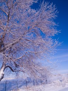 Free Frosted Branches And Blue Sky Royalty Free Stock Photos - 4292628