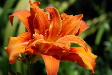 Free Orange Flower Stock Photo - 4293410
