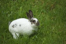 Free Rabbit In The Grass Stock Photo - 4293620