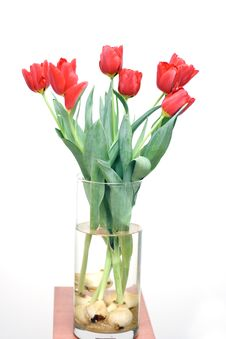 Free Bouquet Of Tulips Royalty Free Stock Photo - 4294095