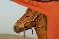 Free Horse Under A Man S Arm Stock Photography - 4294742